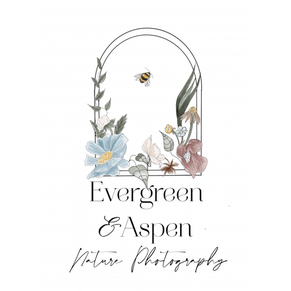 Evergreen and Aspen Nature Photography